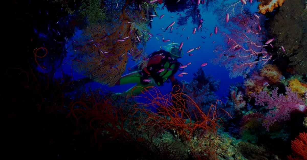 diver in the coral